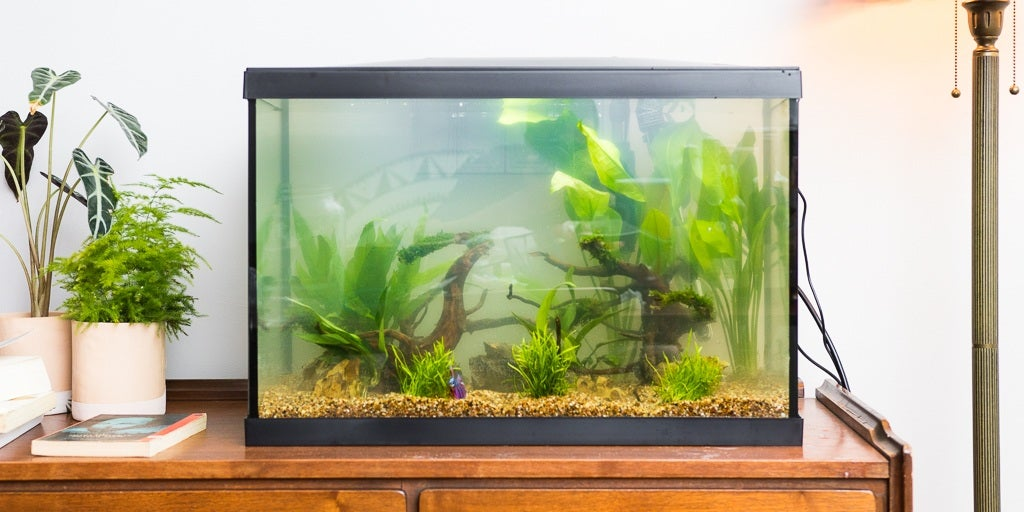 Let's Raising Beautiful Fish at Home, Here's How to Make an Aquarium from Glass and Acrylic Material